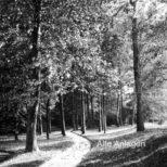 Alte Anlagen - Englische Partie in den Alten Anlagen. Der Weg ist in der Schönheitsline angelegt